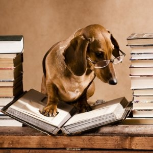 dog reading books dachshund professor.jpg-500x400